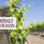 Cabernet Sauvignon – giống nho Cabernet Sauvignon là gì ?