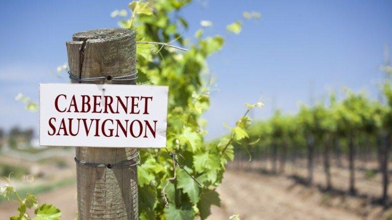 Giống nho Cabernet Sauvignon là gì ? cùng tìm hiểu tại winecellar