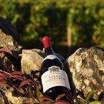 Terroir là gì? Tìm hiểu về Terroir trong rượu vang