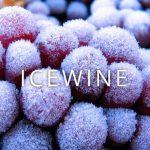 ICE WINE – RƯỢU VANG TUYẾT