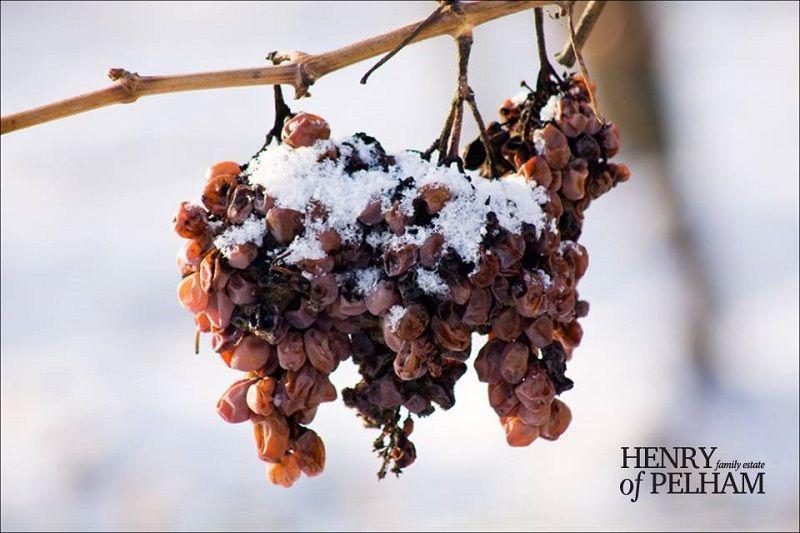 Ảnh 3: rượu Icewine là một trong những dòng vang ngọt được sản xuất kì công trong thời tiết khắc nghiệt nhất