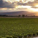 Những vùng trồng nho nổi tiếng trên thế giới Phần 2