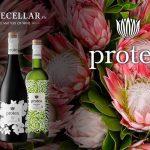 Rượu vang Protea – dòng rượu vang cao cấp đến từ Nam Phi