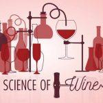 Cảm nhận hương vị rượu vang