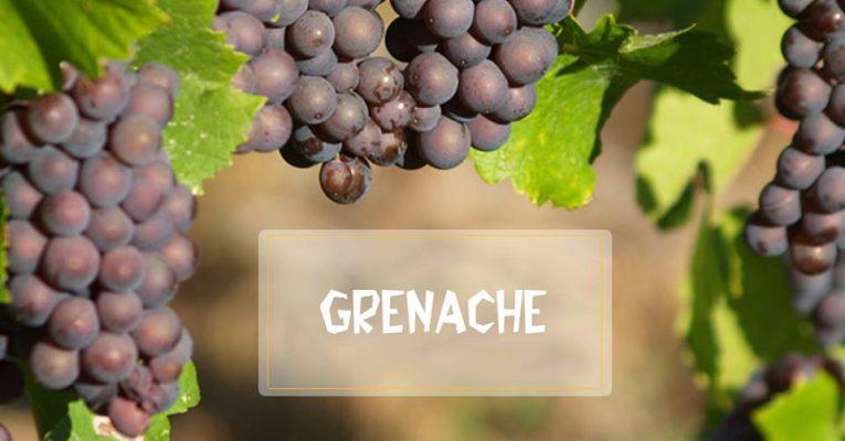 Giống nho Grenache