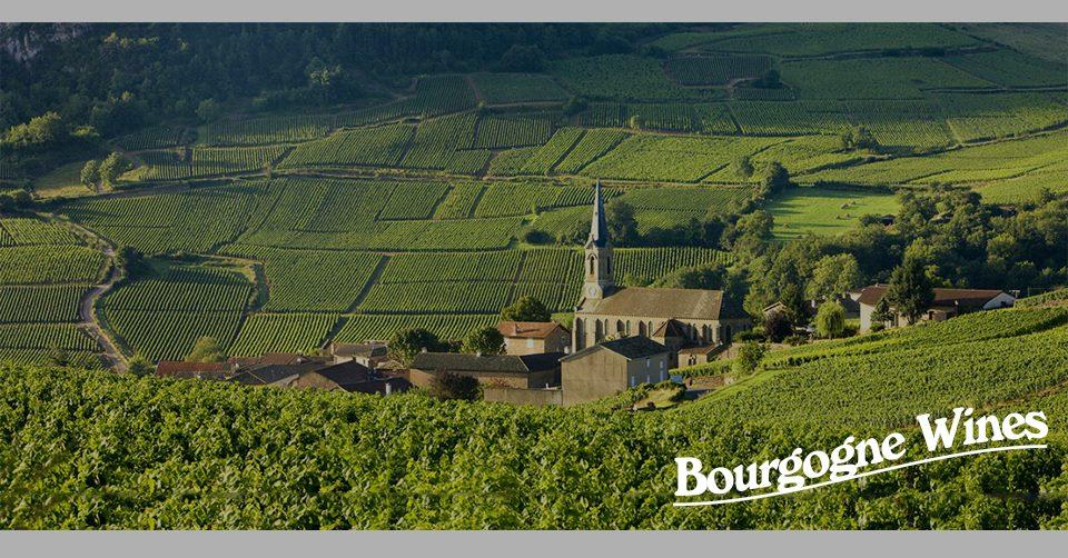 10 điều cần biết về rượu vang vùng Burgundy