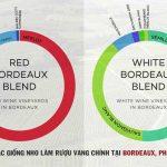 Khám phá các giống nho của vùng Bordeaux phần I
