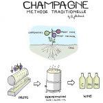 Quy trình sản xuất rượu Champagne