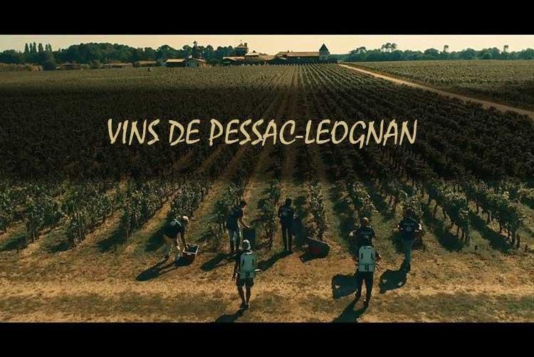 Ảnh 1: Tiểu vùng Pessac-Leognan - nơi sản xuất những chai vang trắng, vang đỏ đẳng cấp