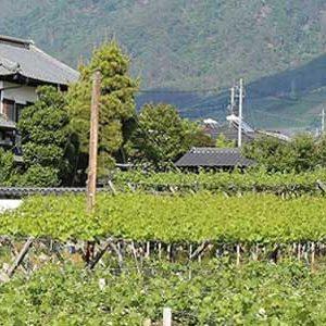 Rượu vang Nhật Bản