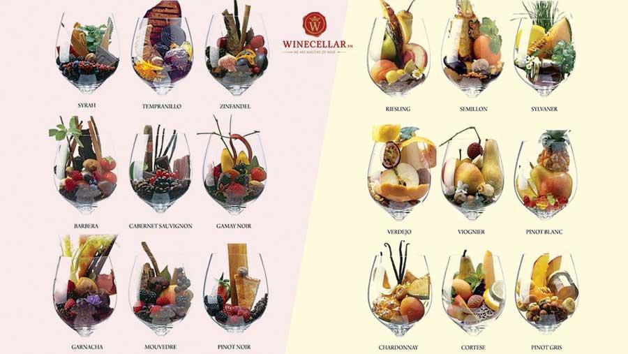 Ảnh 1: Hương vị đặc trưng của những giống nho phổ biến làm rượu vang