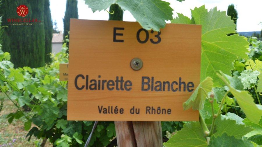 giống nho Clairette tại Rhone Valley
